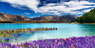 new zealand tour packages from Delhi