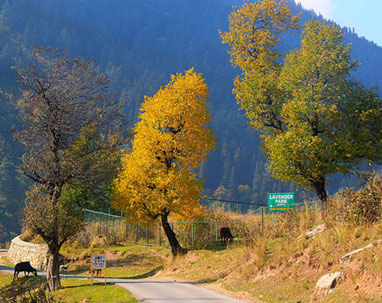 Luxurious kashmir tour
