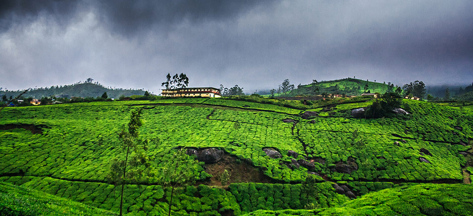 Best Time To Visit Munnar Weather In Munnar Temperature